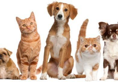 United States Conference of Mayors, Mars Petcare Partner to Make Cities More Pet-Friendly