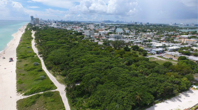 Save the Tree Canopy in North Shore Open Space Park