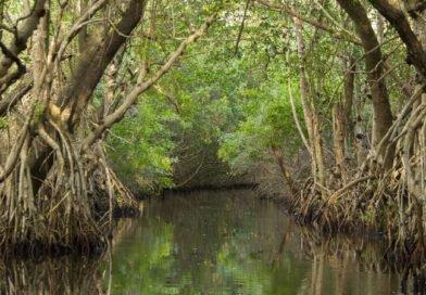 Everglades needs more fresh water to fight salt water intrusion