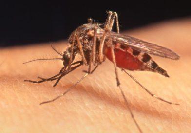 Prepare Your Home For Mosquito Season
